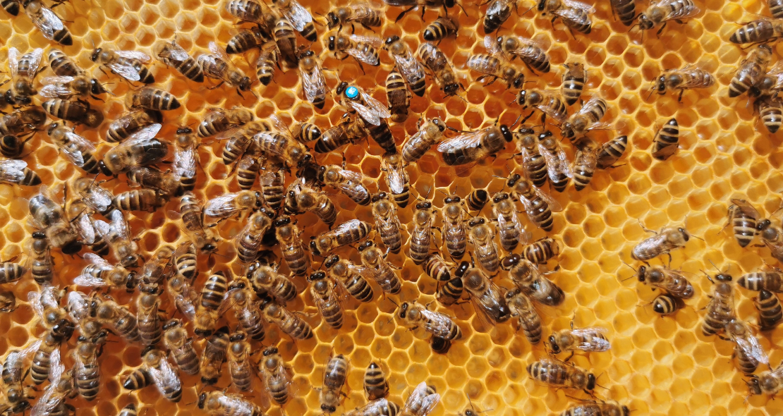 Mating control is the biggest challenge for most of the honey bee breeding programs